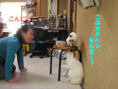 Blogup12_1